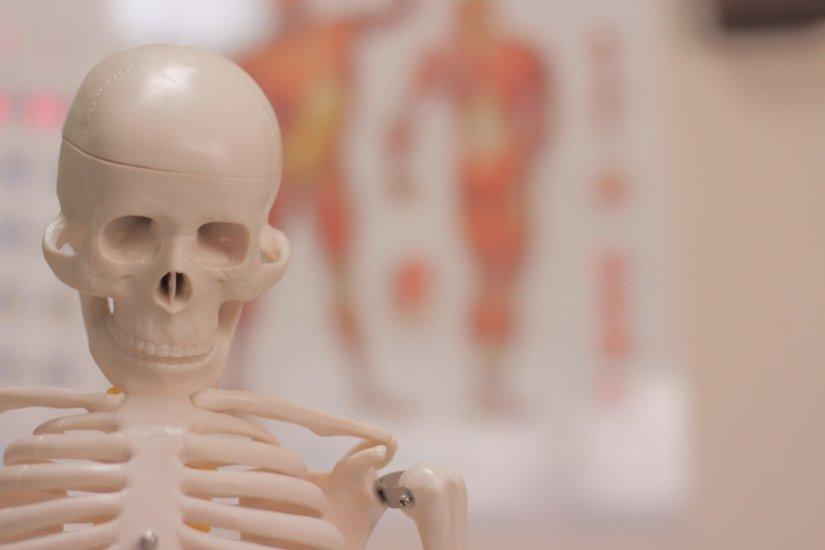 接骨院集客のチラシポスティングは、対象を限定してもポスティングの効果へ繋がる