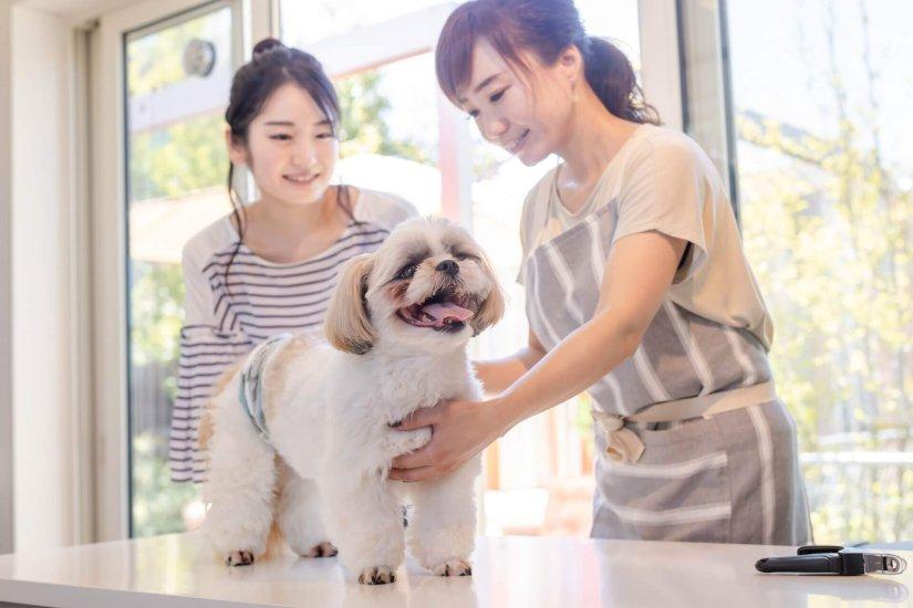ペットマーケティングでペット飼い主へのダイレクトプロモーション